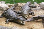سکوت محیط زیست در قبال فاجعه/ جزئیات قطع دست «امیرحمزه» در حمله گاندو