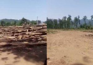 توضیحات اداره کل منابع طبیعی گیلان در خصوص قطع درختان در صومعه سرا