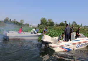 آغاز پاکسازی سنبل آبی از رودخانه چمخاله با نظارت شهردار و اعضای شورا