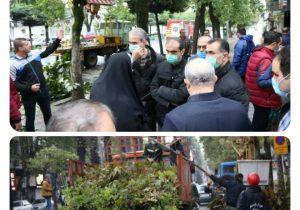با دستور شهردار رشت:  طرح ضربتی «هرس و ایمن سازی درختان خطر آفرین سطح شهر» اجرا شد
