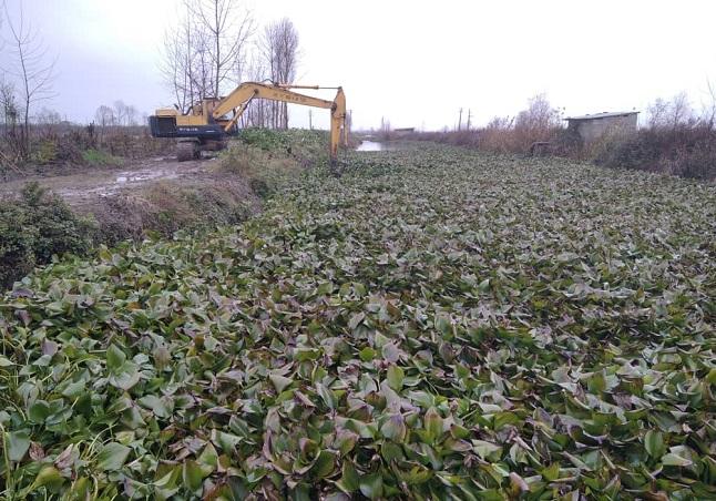 3 مدیر عامل آب منطقه ای گیلان: لایروبی سنبل آبی در رادارکومه لنگرود انجام شد