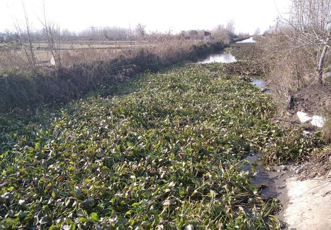5 مدیر عامل آب منطقه ای گیلان: لایروبی سنبل آبی در رادارکومه لنگرود انجام شد