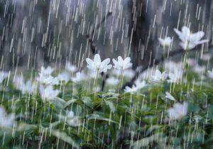 پایان هفته بارانی و برفی برای گیلان | دمای هوا کاهش می یابد