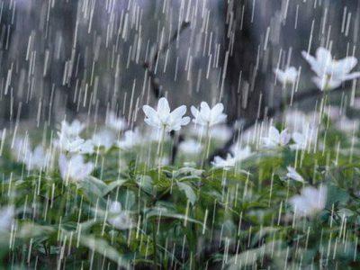 پایان هفته بارانی و برفی برای گیلان   دمای هوا کاهش می یابد