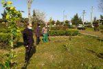 کاشت ۲۰۰ اصله نهال مثمر در ضلع جنوبی پارک فجربه همت شهرداری و شورای اسلامی شهر لنگرود