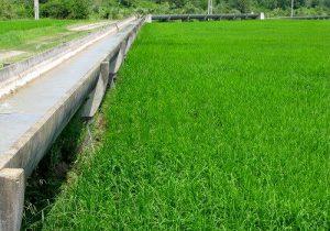 برنامه نوبت بندی آب کشاورزی در گیلان بصورت منظم در حال اجرا است
