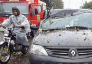 سقوط درخت بر روی خودروی عبوری در رشت یک مصدوم بر جای گذاشت + تصاویر